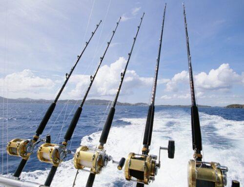 Bluefin tuna spinning